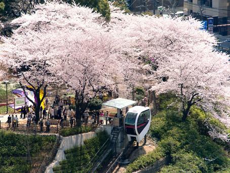 5 Underrated Sakura Spots in Tokyo