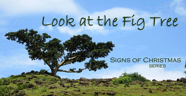 Look at the Fig Tree (Banner).jpg
