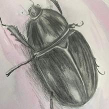 Bugs, Year 9