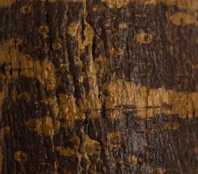樹皮茶則_細節 bark detail