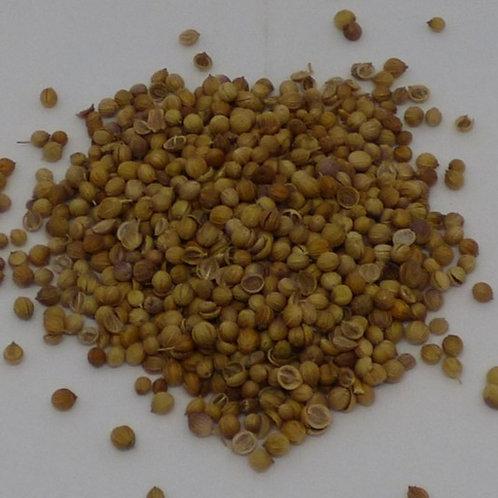 Coriander Seed, 20gm