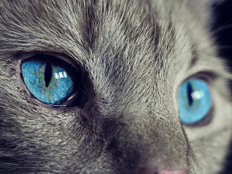 How to Prevent the Spread of Feline Leukemia (FeLV)