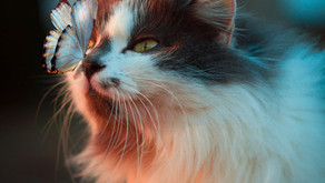 The Importance of Preventive Healthcare for Cats