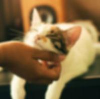 pet sitter scratching cat, fetch pet car