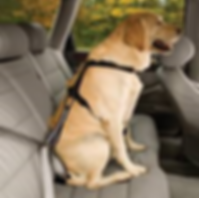 dog seatbelt.png