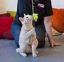 Cat Playtime Services Fetch Pet Care Los