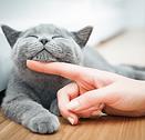 cat scratch.png