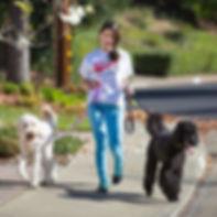 img-dog_walking.jpg