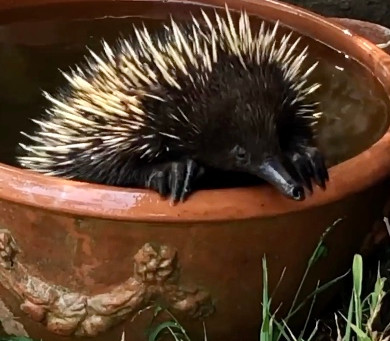 How to Have a Wildlife Friendly Summer Garden