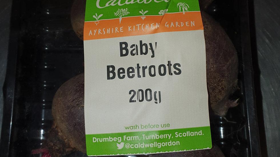 Baby Beetroot