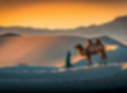 gallery-khongor-sand-dunes-camel.jpg
