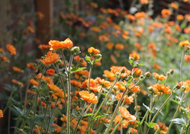 London Fields Garden
