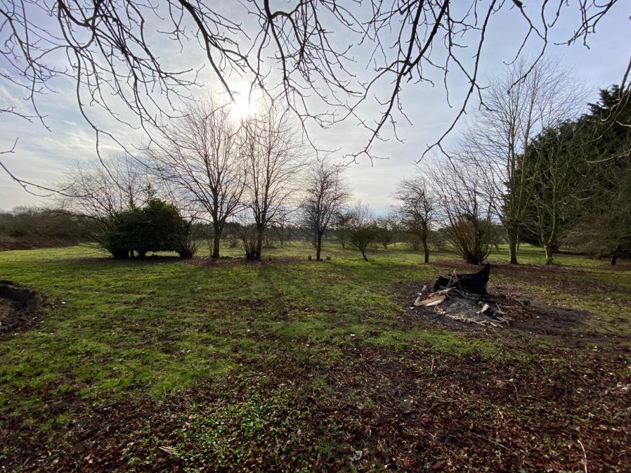 Suffolk Estate Garden