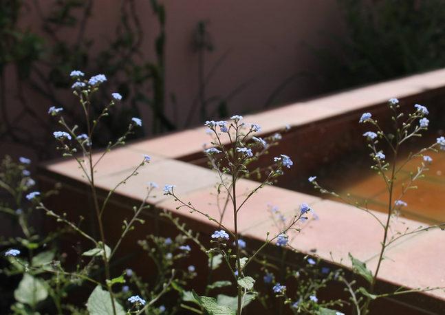 Clapton Garden
