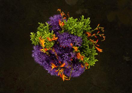 miriaharris_alimobasser_flowers_alliummo