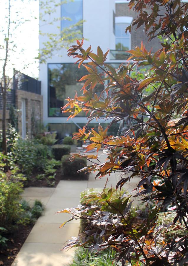 miria+harris_cassland+road+garden_acer+b