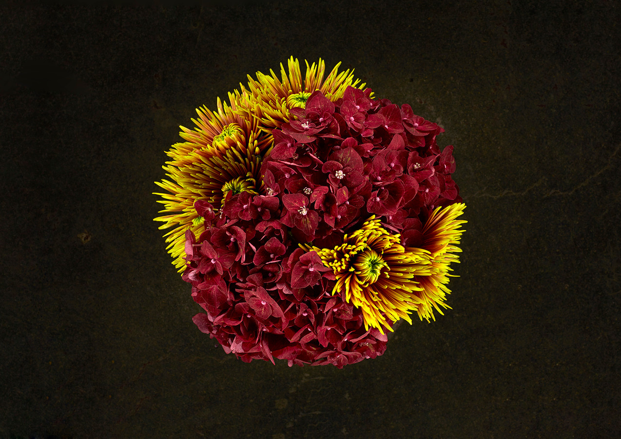 miriaharris_alimobasser_flowers_crysanth
