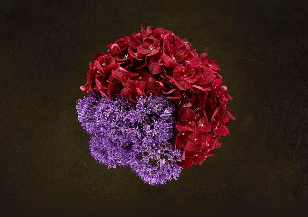 miriaharris_alimobasser_flowers_alliumhy