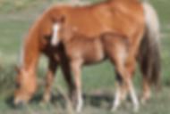 Foals.png