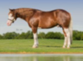 tristan_dark_horses_colonels_shining_gun
