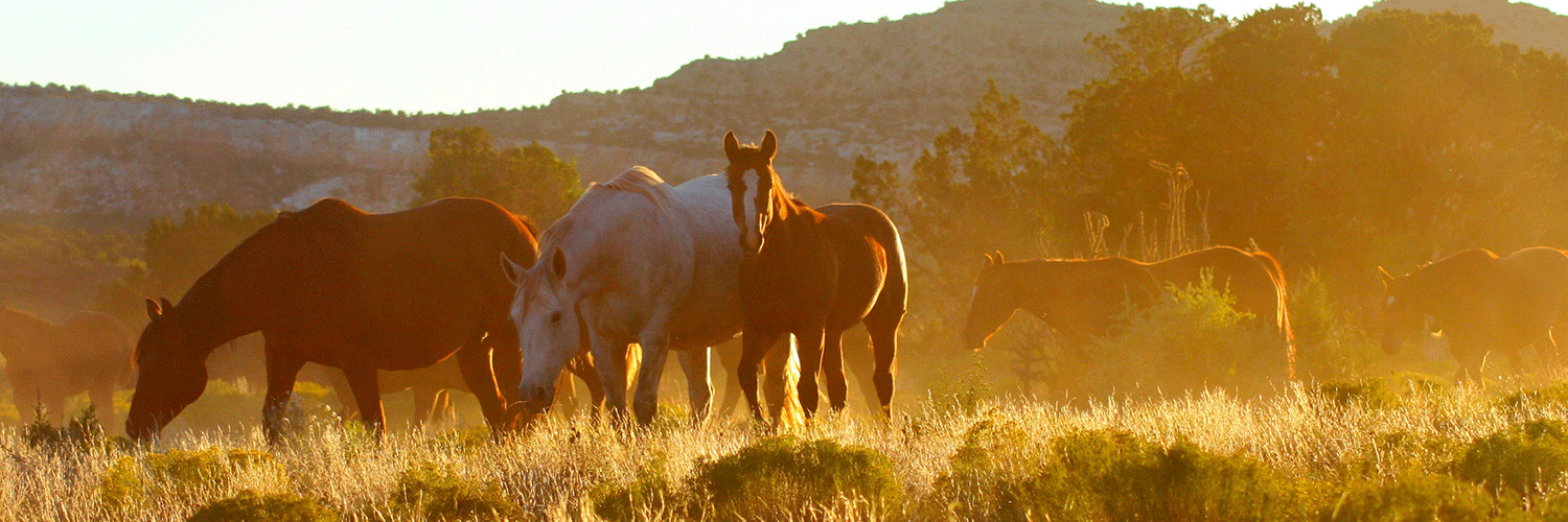 Grazing-At-Sunset