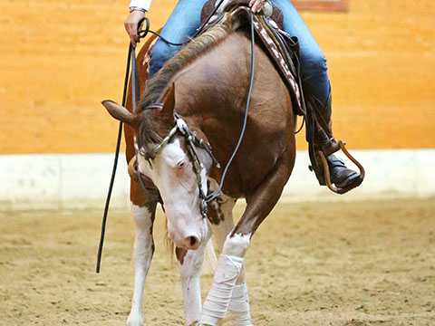 sjoeke-riding-07-crop-u2005
