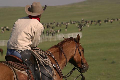 looking over herd.jpg