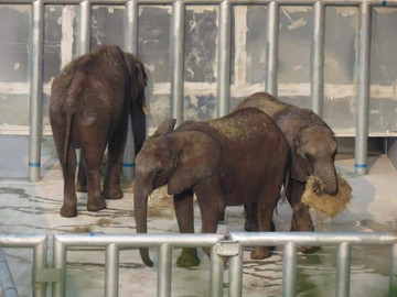 Zim elephants Lifted to China in appalling conditions
