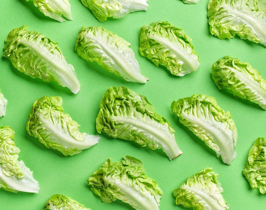 lettuce 2 small.jpg