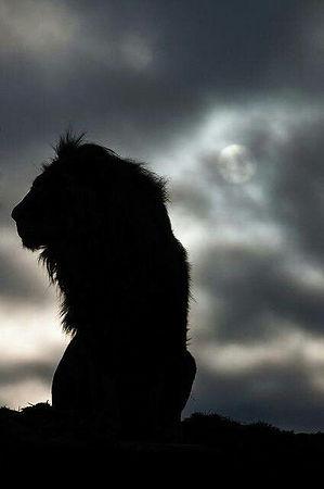 lion shadow.jpg