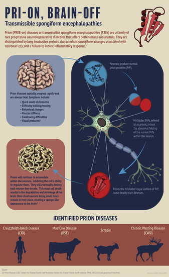 Pri-On, Brain-Off