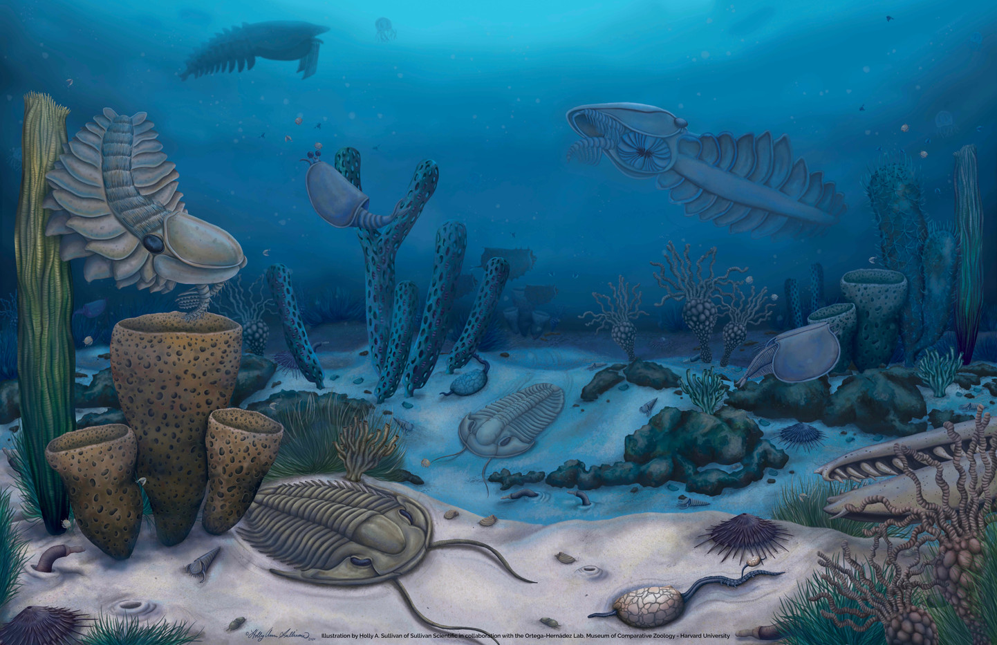 The diverse radiodont fauna from the Marjum Formation of Utah, USA (Cambrian: Drumian)