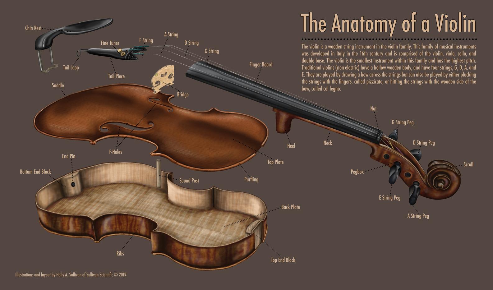 The Anatomy of a Violin