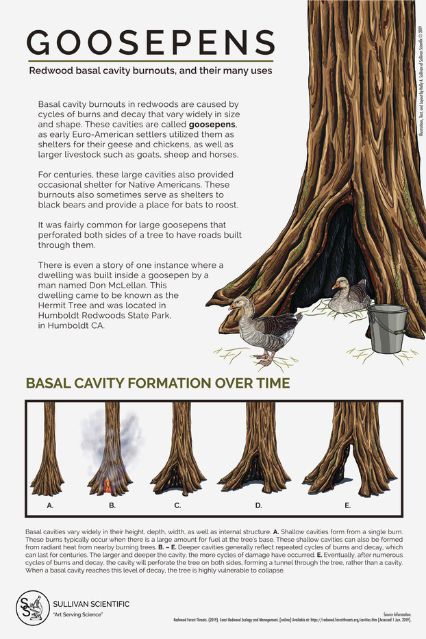 Goosepens: Redwood Basal Cavity Burnouts, and Their Many Uses