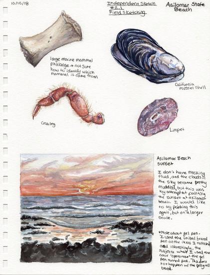 Asilomar State Beach Sketch