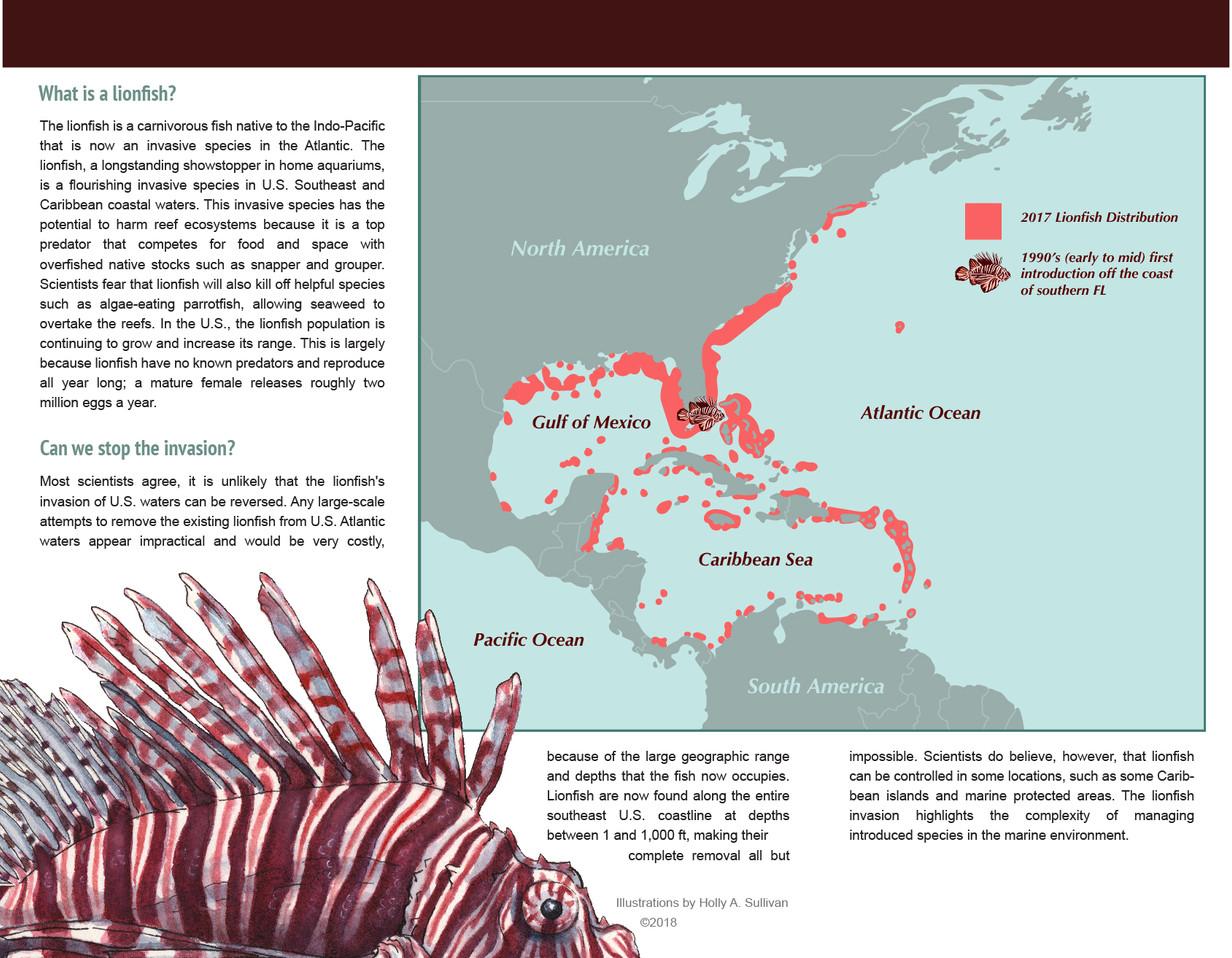 Lionfish Informational Pamphelt