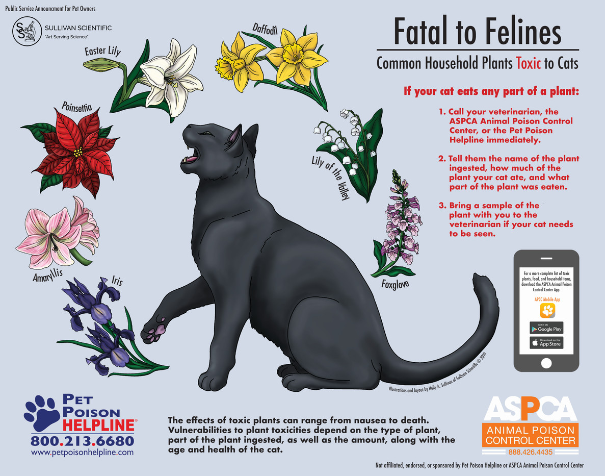 Fatal to Felines: Common Household Plants Toxic to Cats