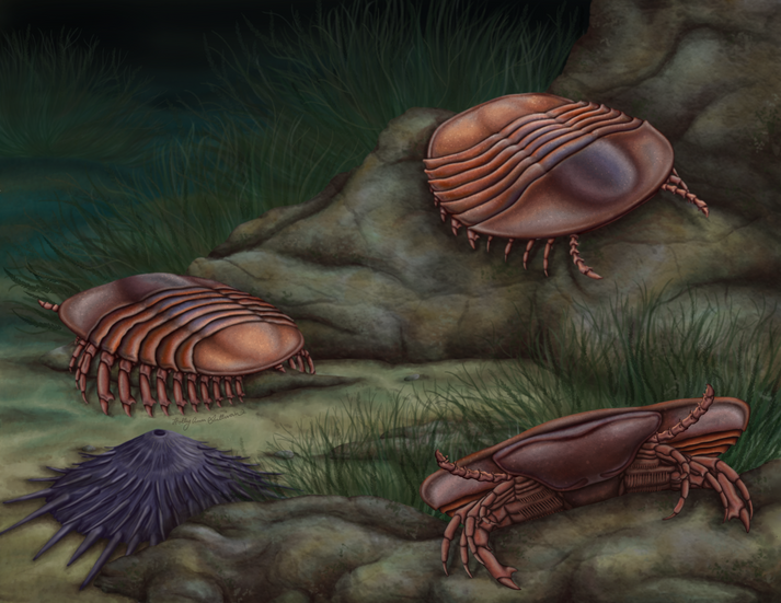 Pygmaclypeatus daziensis from the early Cambrian Chengjiang biota in south China.png