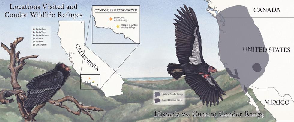"""""""Condor Comeback"""" by Sy Montgomery Map Spread"""