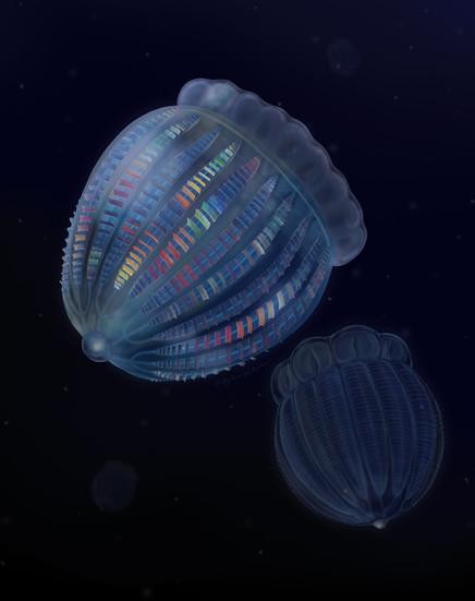New Cambrian comb jellies from Utah