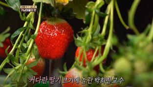시골의 향기가 물~씬 풍기는 🍚 가남마을 집밥 한상 🍚 I 생방송투데이I [미행갑니다]
