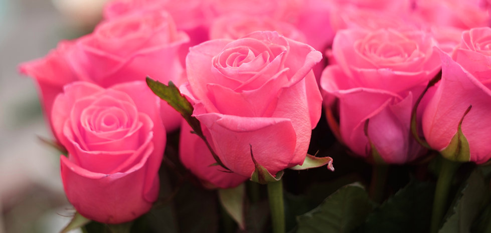 pink-erica.jpg