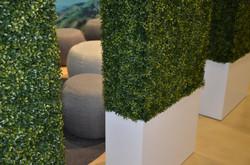 Event Grass Hedges