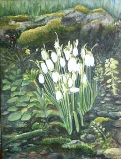 vita blommer