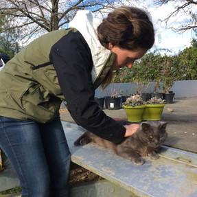 Mobilisation de la colonne chat