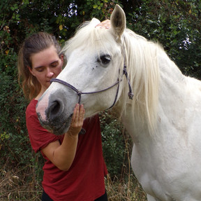 Traitement crânien cheval