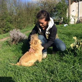 Traitement canin