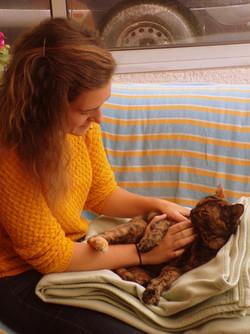 Manon BOUNISSOU Ostéopathie chat