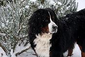 Manon BOUNISSOU Ostéopathie chien