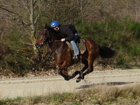 Les ulcères chez le cheval ... de course